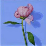 Single-peony-2014